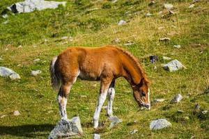 Pferde in den Bergen foto