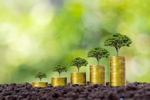 Münzen und Pflanzen werden auf einem Haufen Münzen für Finanzen und Banken gezüchtet. die Idee, Geld zu sparen und die Finanzen zu erhöhen. foto