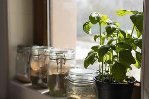 Seitenansicht Gläser und Pflanzenarrangement foto