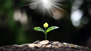 Finanz- und Geschäftserfolgskonzept mit Münzbaumpflanzung und unscharfem grünem Hintergrund. foto