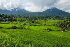 die tegallalang reisterrassen auf bali in indonesien foto