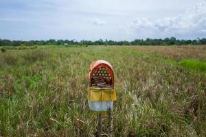 Blick auf Reisfelder in Canggu auf Bali foto