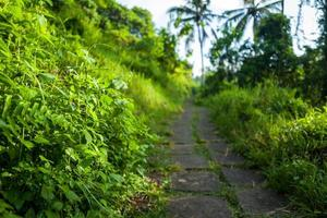 die Campuhan Gratwanderung in Ubud auf Bali foto