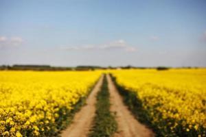 verschwommener Hintergrund von gelbem Raps auf einem Hintergrund des Himmels. selektiver Fokus auf Farbe. Rapsfeld mit reifem Raps, landwirtschaftlicher Hintergrund foto
