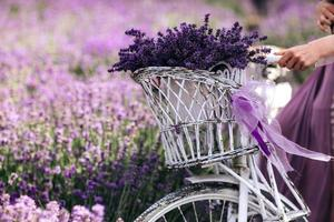ein Strauß Lavendel in einem Korb auf einem Fahrrad in einem Lavendelfeld ein Mädchen mit einer Velispette ohne Gesicht, das im Sommer Lavendel sammelt foto