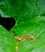 Nahaufnahme eines grünen Blattes. Hintergrund für ökologische Anwendungen. foto