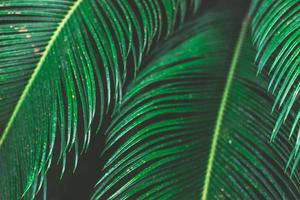 tropische Palmblätter, Blumenmusterhintergrund foto