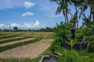 Blick auf Reisfelder in Canggu Inbali foto