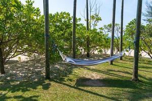 tropischer Strand mit Hängematte unter Palmen im Sonnenlicht foto