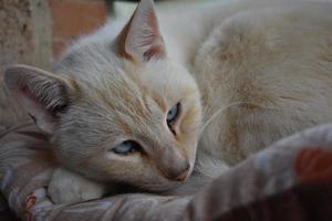 das Katzenportrait foto