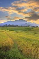 indonesische Landschaftsansicht mit Bergen und Sonnenaufganghimmel am Morgen in einem kleinen Dorfreisfeld foto