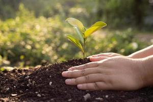 Bokeh grüner Hintergrund weibliche Hand, die Bäume auf natürlichem Rasenrasenwaldschutzkonzept pflanzt foto
