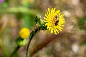 Vespa auf Blume foto