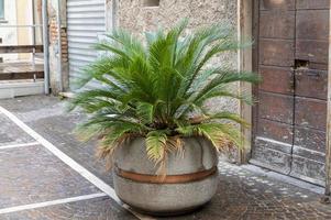 kleine Palme auf einer Vase als Display foto