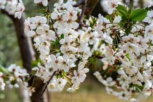 du Obstbaum foto