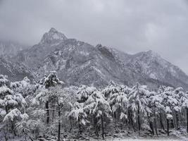 Kiefernwald unter dem Schnee und große Berge im Hintergrund. Seoraksan-Nationalpark, Südkorea. Winter 2018 foto