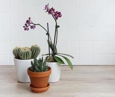 Kaktus, Orchideenblüten und Sukkulente in Töpfen auf dem Tisch foto