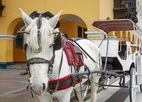 traditionelles pferdegezogenes fahrzeug in lima, peru foto