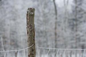 Detail eines gefrorenen Eisenzauns foto