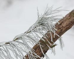 Zweige von gefrorenen Büschen foto
