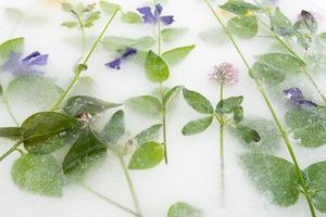 in Eis und Kräutern eingefrorene Blumen foto