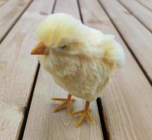Huhn auf den Brettern zwei foto
