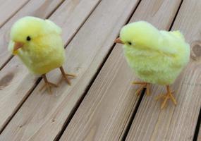 Zwei ostergelbe Spielzeughühner stehen auf den Brettern. foto