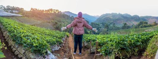 Angkhang Erdbeerfarm, Provinz Chiang Mai foto