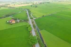 Feldreis mit Landschaftsgrünmusternaturhintergrund foto