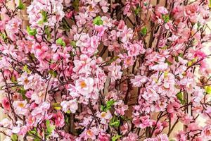 Zweige mit rosa Sakura-Blüten auf unscharfem Hintergrund foto