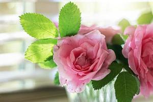 große rosa Hagebuttenblüten in einer Glasvase am Fenster foto