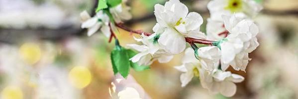 Zweige mit weißen Sakura-Blüten auf unscharfem Hintergrund foto