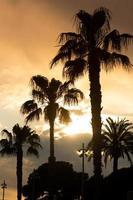 palmen sonnenuntergang golden blauer himmel hintergrundbeleuchtung foto