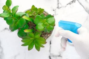 Hand hält Sprühflaschen-Bewässerungsplan auf Tisch mit Kopierraum foto