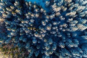 schöner märchenhafter Winter verschneiter Morgenwald, der von einer Drohne geschossen wurde. foto