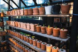 Experiment für den Anbau von Kakteen in der Farm. foto