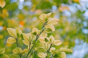 grüne Baumblätter in der Natur im Frühling foto