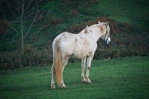 schönes weißes Pferdeporträt auf der Wiese foto