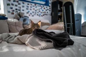 eine Savannenkatze auf einer Couch foto