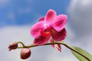 Nahaufnahme von Orchideenblüte foto