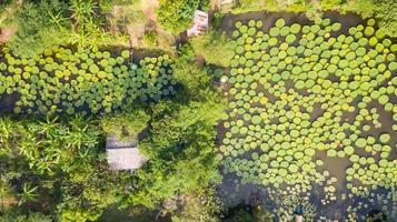 Luftaufnahme von oben auf Victoria Seerosen foto