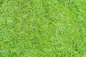 Draufsichtfoto, grünes Grasbeschaffenheitshintergrund foto