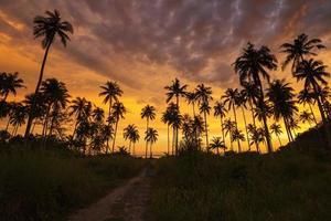 Silhouette der Kokospalme bei Sonnenuntergang am tropischen Strand foto