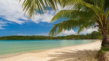 schöner tropischer Strand und Meer mit Kokospalme unter blauem Himmel foto