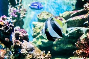 fische im unterwasser foto