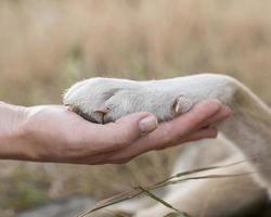 Seitenansicht Person, die die Pfote des Hundes hält. hochwertiges schönes Fotokonzept foto