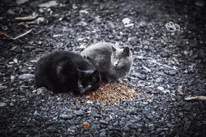 schwarze Katze im Schnee foto