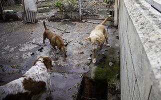 Hunde in einem Zwinger eingesperrt foto