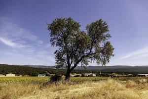 einsamer Baum im Wald foto