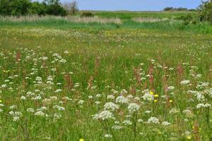 Frühling Wildblumen Reserve Jersey uk foto
